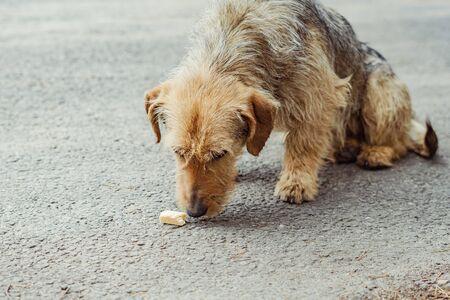 shaggy dog sitting on the pavement sad Stock Photo