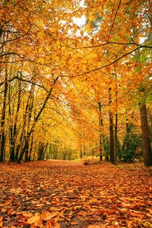 Caída de otoño hermoso bosque escena con colores llamativos y excelente detalle Foto de archivo