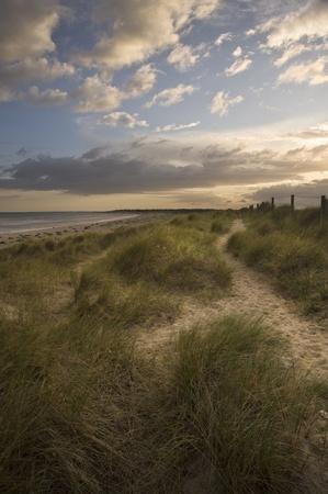 View along path on sand dune at Littlehampton photo