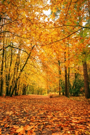 avenues: Beautiful autumn fall forest scene with vibrant colors and excellent detail