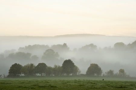 english countryside: Beauttiful stirring forest and field scene with layers of mist and fog before sunrise