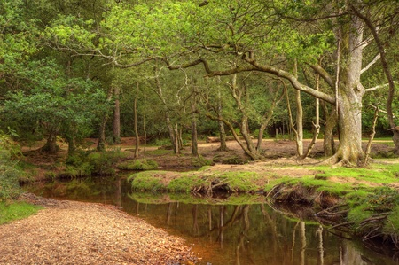 overhanging: Beautiful lush green forest scene with stream through centre with hint of autumn colors Stock Photo