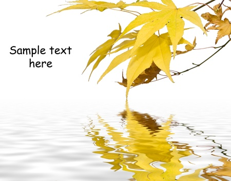 Plenty of copy space in image of Autumn fall bright golden leaves Stock Photo