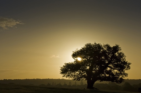 haze: Silhouette of ancient English oak tree at sunrise in Autumn Fall