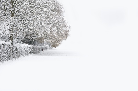 Beautiful Winter forest scene with deep virgin snow and plenty of space for your text and copy space Stock Photo - 8530512