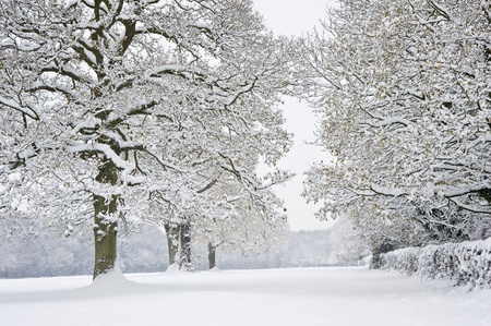 Beautiful Winter forest scene with deep virgin snow and plenty of space for your text and copy space photo