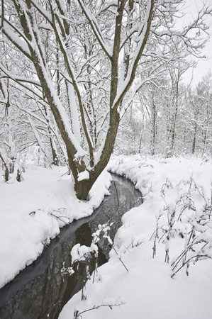Slow flowing stream running through forest Winter scene with deep virgin snow and trees overhanging stream Stock Photo - 8530564
