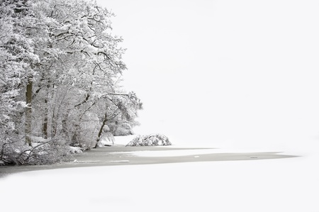 snowy field: Beautiful Winter forest scene with deep virgin snow and plenty of space for your text and copy space Stock Photo