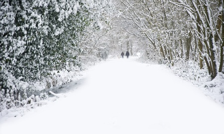 Beautiful winter forest snow scene with deep virgin snow and family walking dogs on path walkway Stock Photo