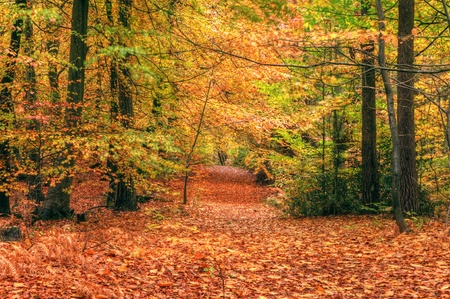 autumnal: Beautiful autumn fall forest scene with vibrant colors and excellent detail