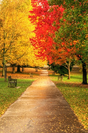 Mooie herfst herfst bos scène met levendige kleuren en uitstekende detail