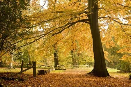 Schöne fallen Herbst Wald Szene mit lebendigen Farben und ausgezeichnete detail Standard-Bild