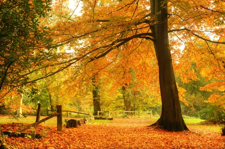 autumn scene: Beautiful autumn fall forest scene with vibrant colors and excellent detail