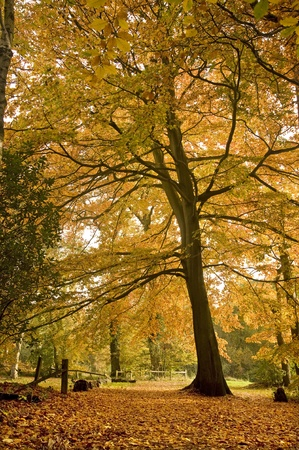 Beautiful autumn fall forest scene with vibrant colors and excellent detail photo