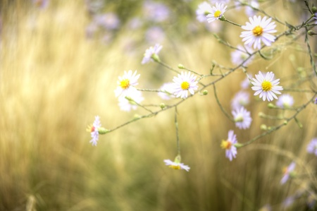 Lovely white flower wild meadow blurred background feel good image Stock Photo - 8560194