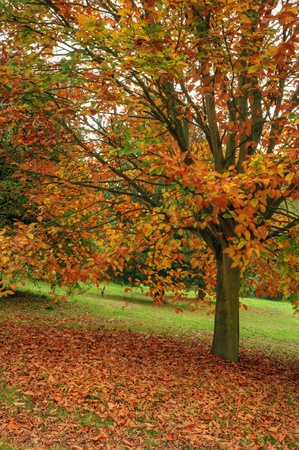 Vivid Autumn Fall scene with excellent detail and vibrant colors photo