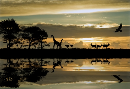 africa safari: Silhouette of animals in Africa theme setting with beautiful colorful sunset Stock Photo