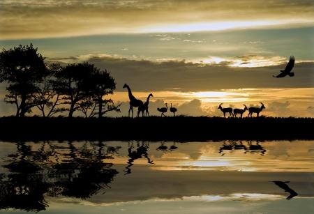 Silueta de animales en la configuración de tema de África con hermoso colorido puesta de sol Foto de archivo