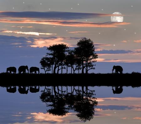 Silhouette von Tieren in Afrika Designeinstellung mit wundersch�nen bunten Sonnenuntergang