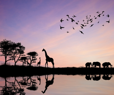 water birds: Safari in Africa silhouette of wild animals reflection in water