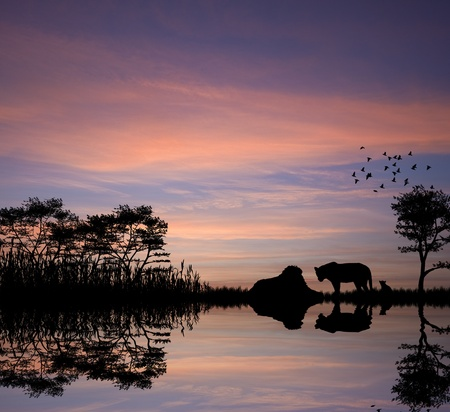 Safari in Africa silhouette of lions reflection in water Stock Photo