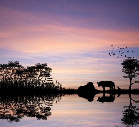 Safari in Africa silhouette of lions reflection in water photo