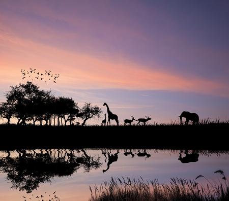 arte africano: Safari en la reflexi�n de animales salvajes de silueta Africana sobre el agua