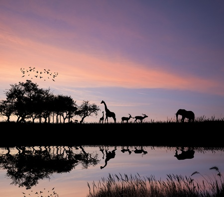 land mammals: Safari in African silhouette wild animals reflection on water