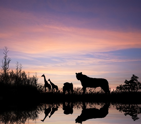 cubs: Safari in African silhouette wild animals reflection on water