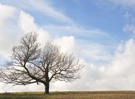 cliche': Cliche tree on hill with beautiful blue sky background