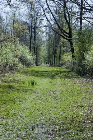 invitando: Encantador relajante invitando a imagen de paseo a trav�s de vibrante verde bosque de primavera verano