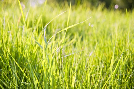 Background of lush green grass blades with defocussed bokeh lights background photo