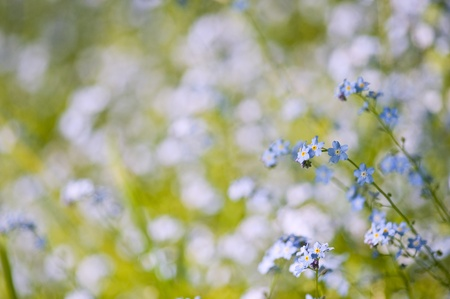 Background of lush green grass blades and forget-me-nots flowers with defocussed bokeh lights background photo