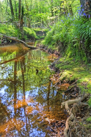 upstream: Beautiful image from very low point of view along stream flowing upstream with deep vibrant lush foliage on either bank and sunlight brightening up background Stock Photo