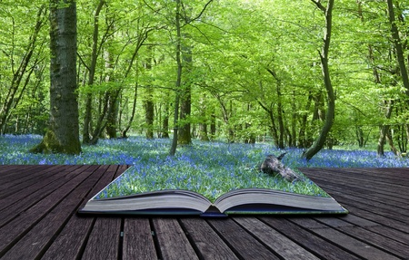 Contents of magical book containing bluebell woods spills over and blends into background photo
