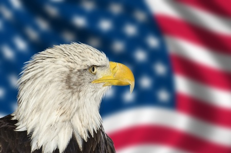 Portrait of American bal eagle against USA flag stars and stripes photo