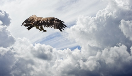 tawny: Tawny eagle prepares to swoop against moodt sky