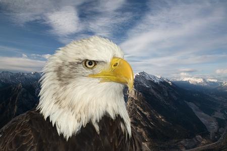 piebald: S�mbolo estadounidense de �guila calva de esperanza contra el paisaje de monta�a
