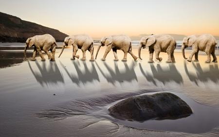 seguito: Elefanti in seguito leader in un'immagine unica e astratta di leadership e lavoro di squadra