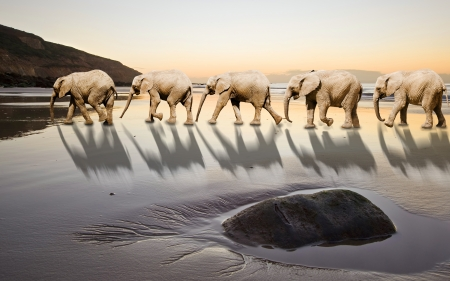 Elephants following leader in unique and abstract image of leadership and teamwork