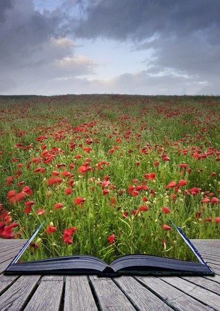 Creative concept idea of poppy field landscape image coming out of pages in magical book photo