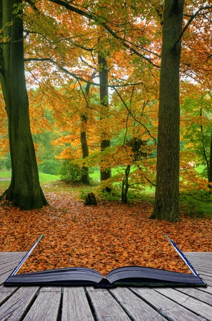 Creative concept idea of Beautiful autumn fall forest scene with vibrant colors and excellent detail coming out of pages in magical book photo