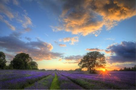 Sch�nes Bild von atemberaubenden Sonnenuntergang mit atmosph�rischen Wolken und Himmel �ber lebendige reif Lavendelfelder in englischen Landschaft Landschaft