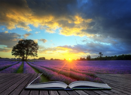 létfontosságú: Kreatív koncepció kép gyönyörű kép a lenyűgöző naplemente légköri felhők és az ég fölött élénk érett levendula mezők angol vidéki táj