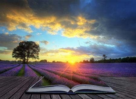 Kreatives Konzept Bild des sch�nen Bild von atemberaubender Sonnenuntergang mit atmosph�rische Wolken und Himmel �ber pulsierenden reif Lavendelfelder in englischer Landschaft Landschaft