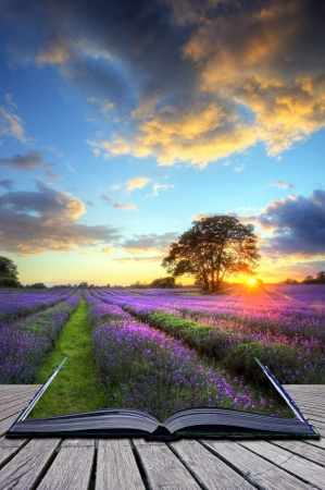 Creative concept image of beautiful image of stunning sunset with atmospheric clouds and sky over vibrant ripe lavender fields in English countryside landscape Stock Photo - 10382202
