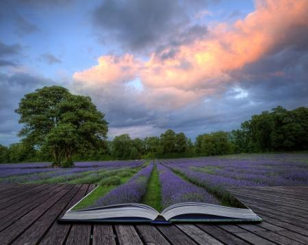 Sch�nes Bild von atemberaubenden Sonnenuntergang mit atmosph�rischen Wolken und Himmel �ber lebendige reif Lavendelfelder in englischen Landschaft Landschaft kommt aus Seiten im Zauberbuch, kreatives Konzept Bild
