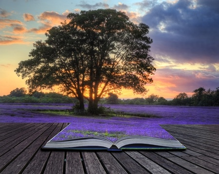 essentials: Beautiful image of stunning sunset with atmospheric clouds and sky over vibrant ripe lavender fields in English countryside landscape coming out of pages in magic book, creative concept image