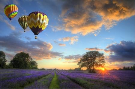 大気の雲と空高く飛んでいる熱気球とイギリスの田園風景の中の活気に満ちた熟したラベンダー畑の上で見事な夕焼けの美しい画像