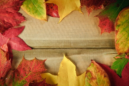 nautral: Colorful Autumn Fall leaves on rustic grunge wooden background